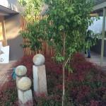 Front Door Garden after